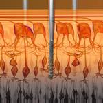 Nano-Retina - elektroda i nerwy